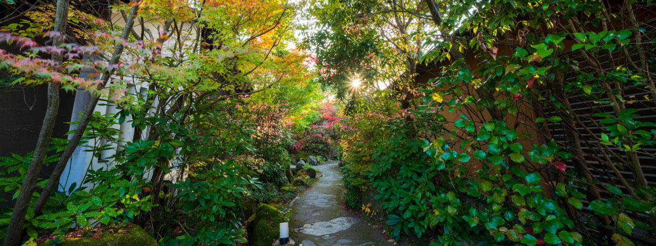 Garden and approach