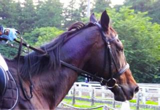 骑马俱乐部 CRANE汤布院